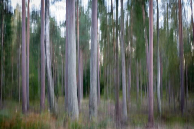 Intimate landscapes